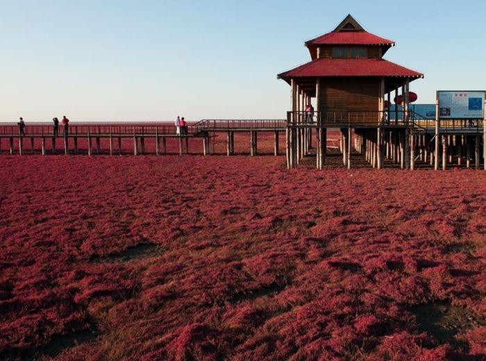 Doğa Harikası Plajlar galerisi resim 3