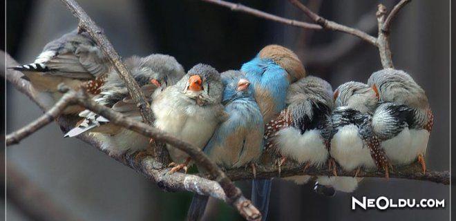 Kuşlar Yardım Bekliyor