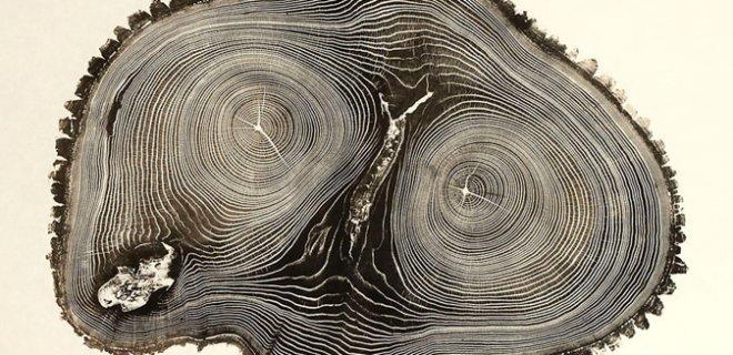 ağaç baskı