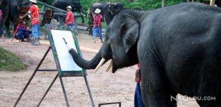 Hayvanlarda Görülen 10 İnsan Davranışı