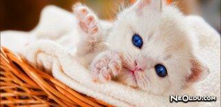 En İyi Yavru Kedi Mamaları