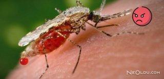 Sivrisineklerin Seni Isırması İçin 7 Neden