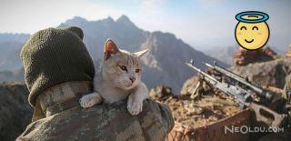 Mağarada Bulunan Kediler Mehmetçiğe Dost Oldu