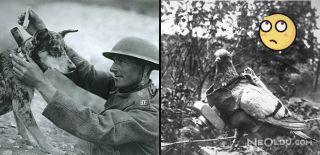 Yok Artık! Savaşlarda Ordulara Hizmet Etmiş 15 Hayvan
