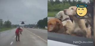 Teksas'ta Bir Hayvansever Köpekleri Kasırgadan Kurtardı