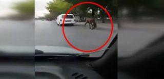 Atı Aracının Arkasına Bağlayıp Koşturdu