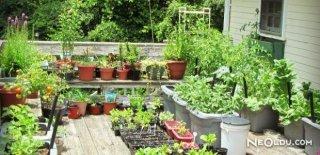 Sebze Nasıl Yetiştirilir?