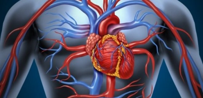 -kalp-ve-damar-rahatsizliklarinin-da-onune-gecer.jpg
