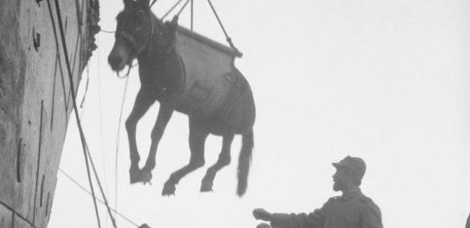 savaşlarda kahraman hayvanlar