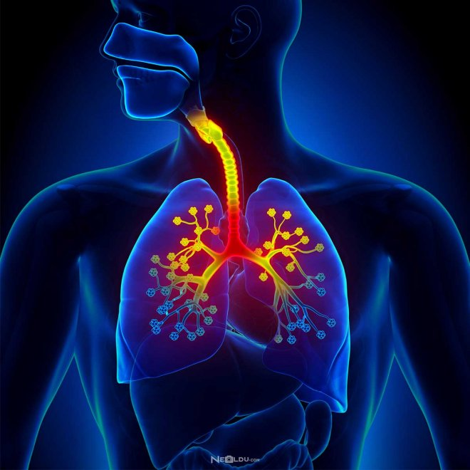 akciğer-enfarktüsü.jpg