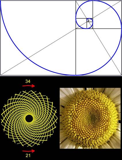 altin-spiral-ve-ay-cicegi.jpg