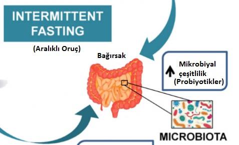 Aralıklı Oruç (Intermittent fasting) Biyolojik bir Arınma mıdır Yoksa Sadece bir Ritüel mi?