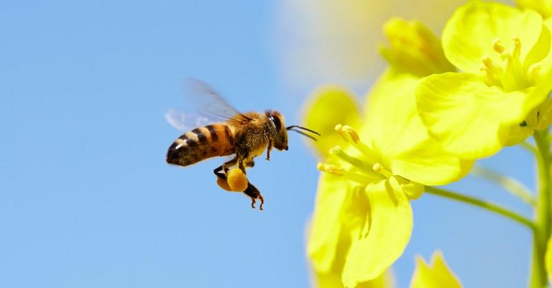 arılar hakkında harika bilgiler