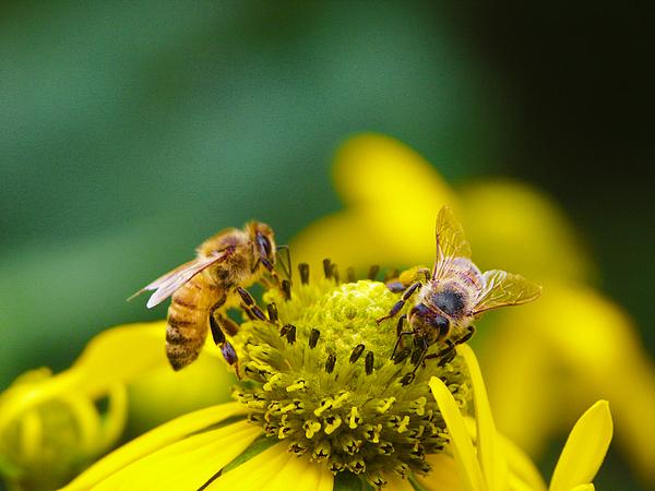 arılar hakkında muazzam bilgiler