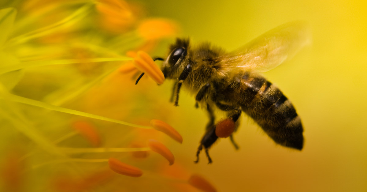 arılar ve vızıltılar