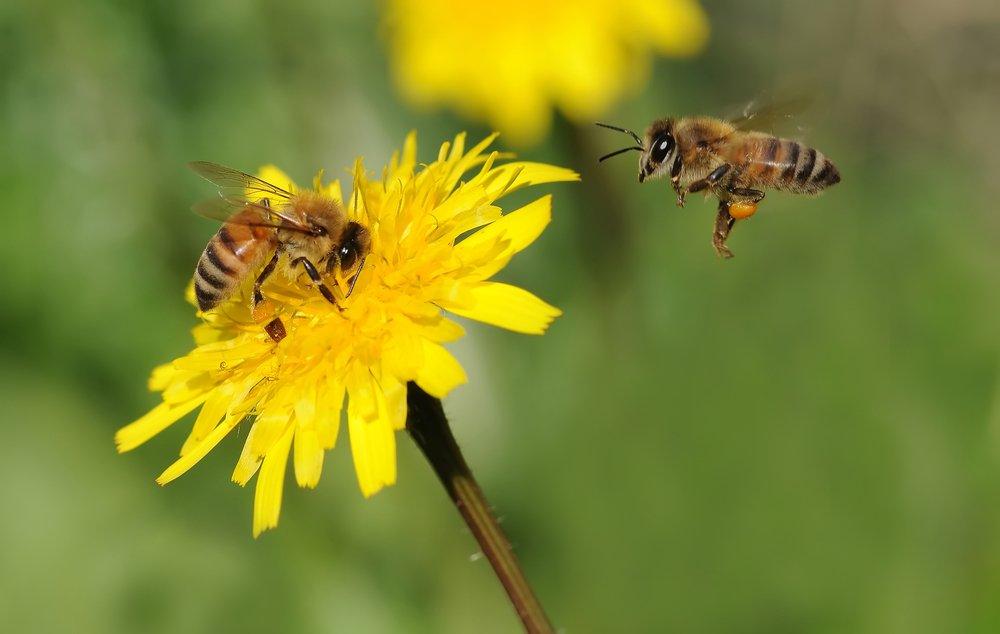 arıların hayatı