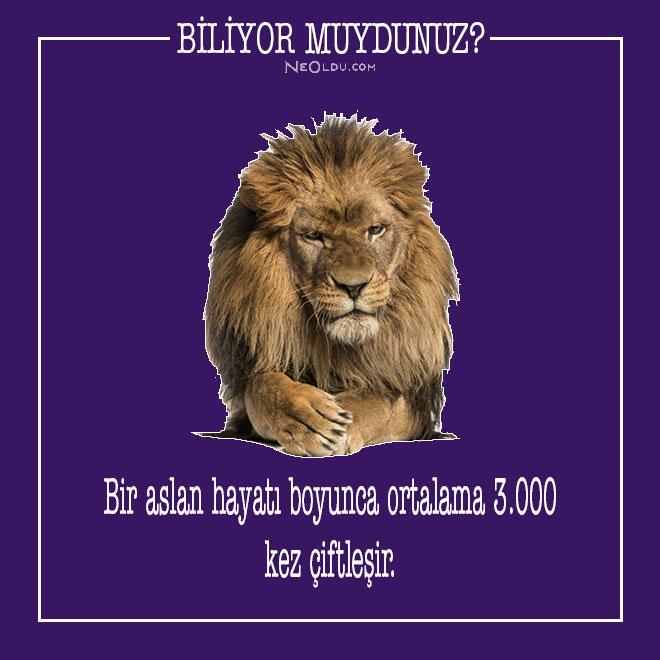 aslan hakkında bilgi