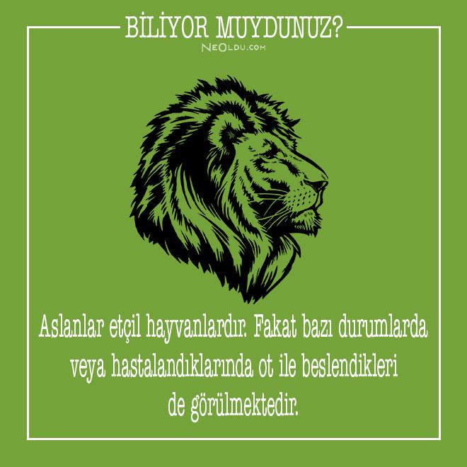aslanlar hakkında bilgi