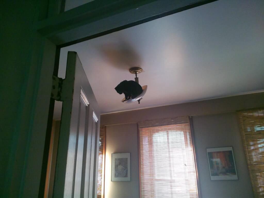 avizeye asılan kedi