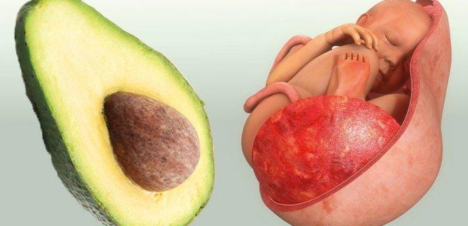 avokado-uterus.jpg