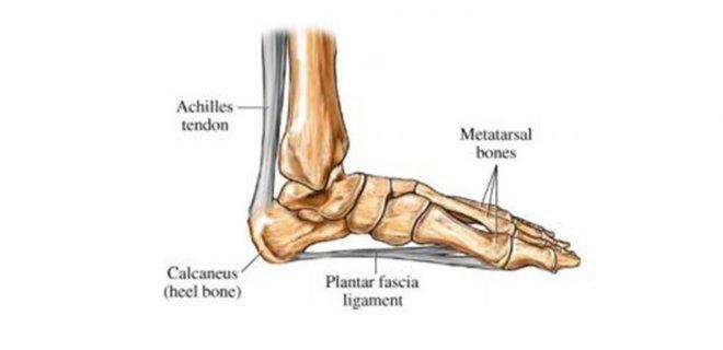 ayak-tabani-anatomisi.jpg