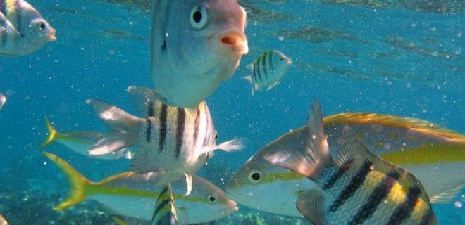 Balıkların Beslenmesi