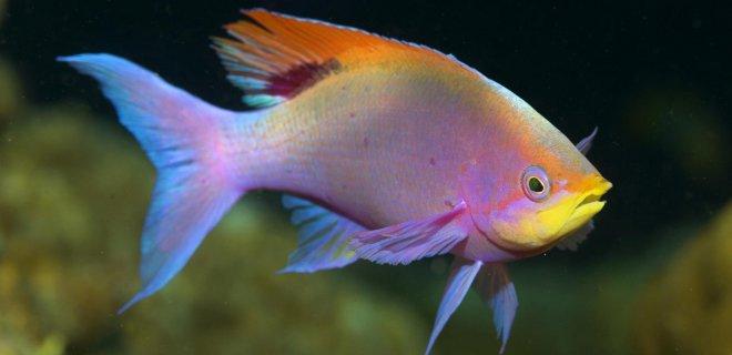 Akvaryum Balıklarına Verilebilecek Yemler