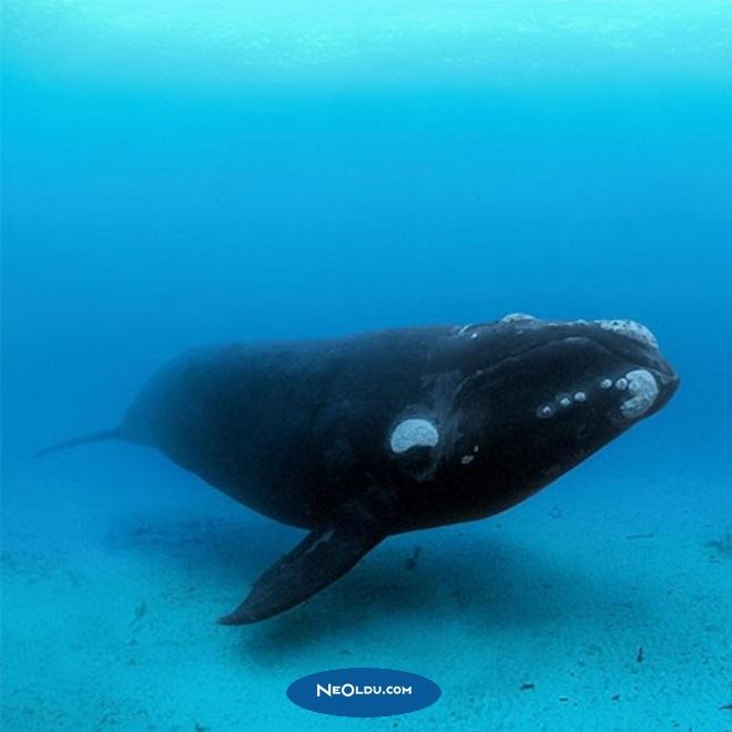 balinalar hakkında bilgi