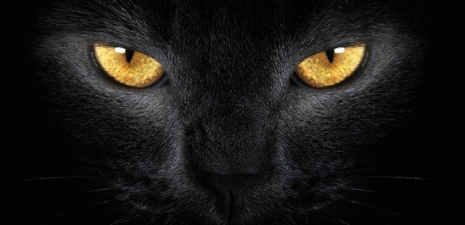 batıl inanç kara kedi