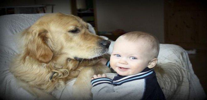 bebeklerde-evcil-hayvan-alerjisi.jpg
