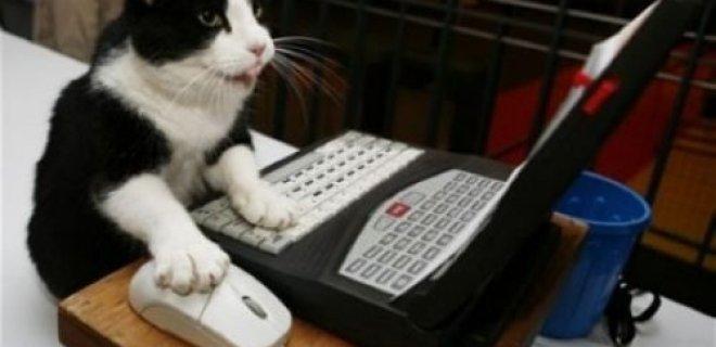 bilgisayar-kullanan-kedi.jpg