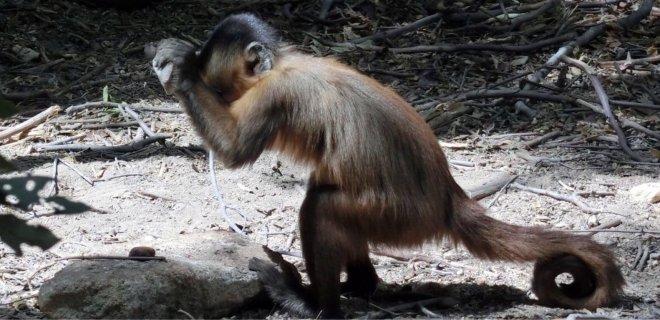 brezilya-maymunlari.jpeg