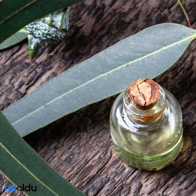 bronsite-iyi-gelen-bitkiler-007.jpg