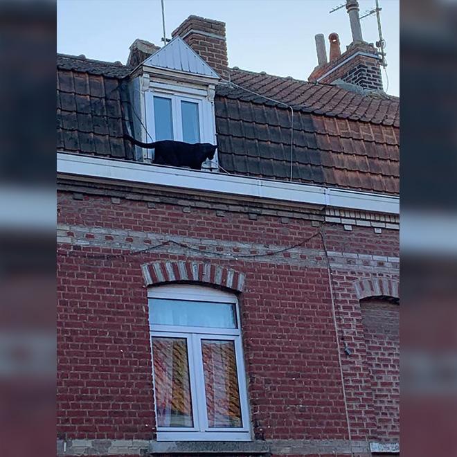 Çatı Katındaki Panter