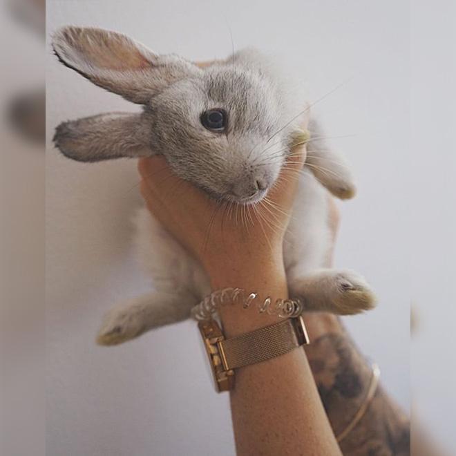 Çiftlikten Tavşan Çalan Kız