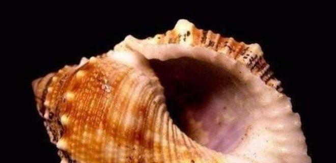 deniz-kabugu.jpg