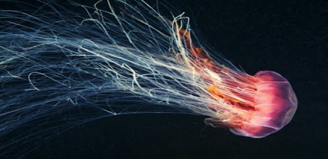 denizanasi-003.jpg