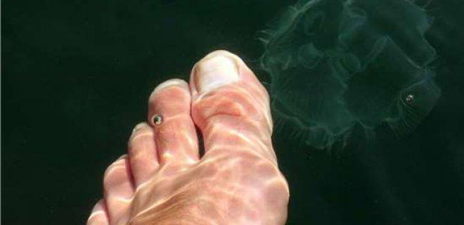 denizanasi-sokmasi.jpg