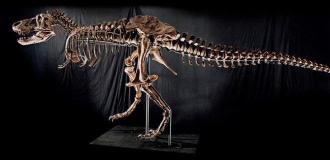 dinozor-kuyrugu.jpg