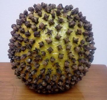 Doğal Sinek Kovucu Elma