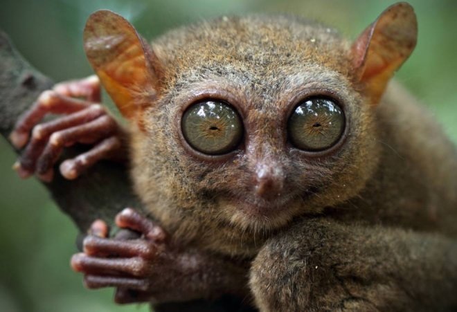 dunyanin-en-kucuk-maymun-turu.jpg