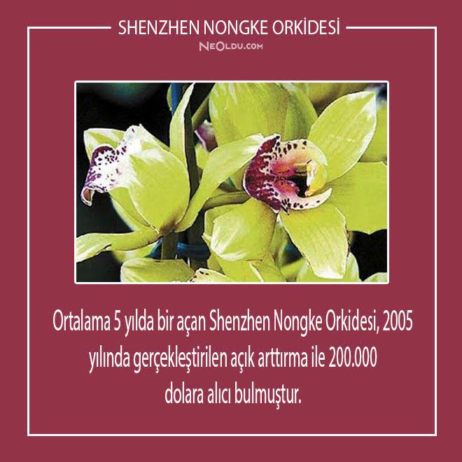 Dünyanın En Pahalı Çiçekleri
