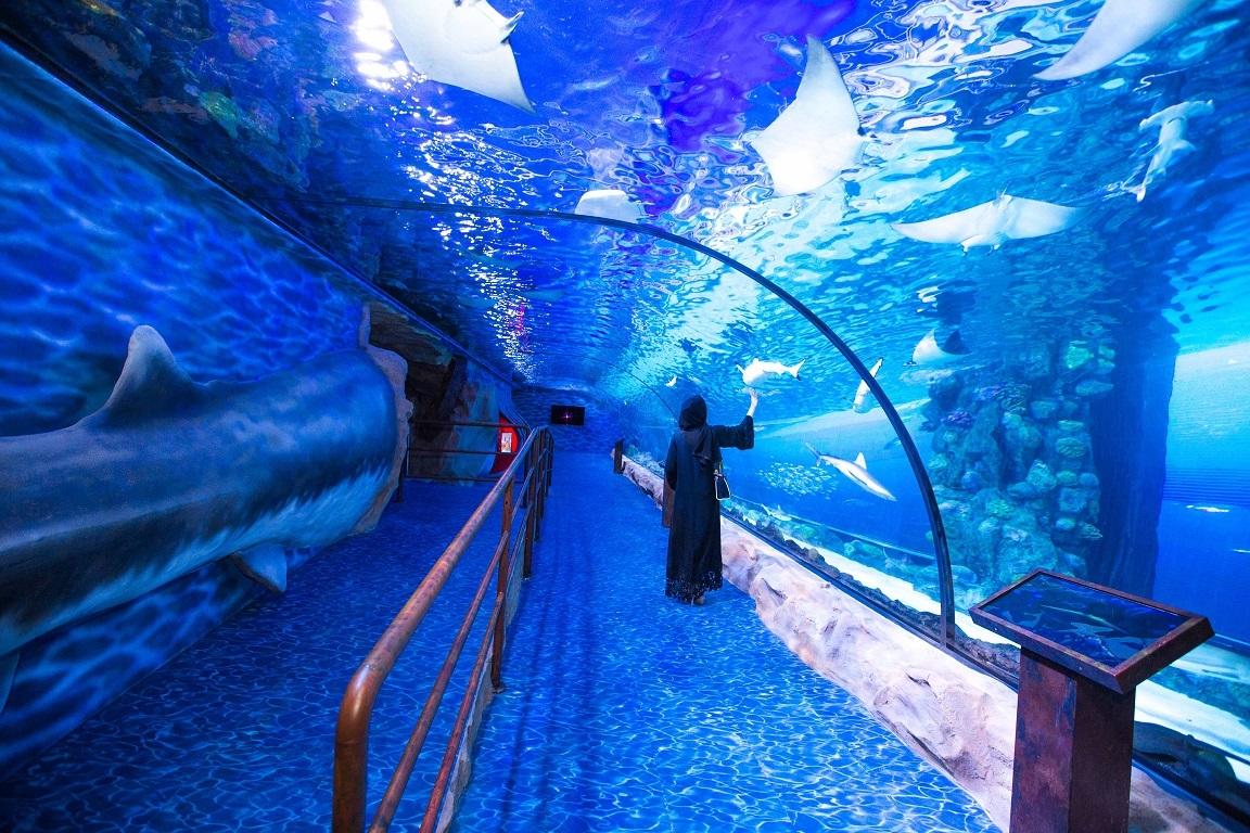 emaar akvaryum sualtı hayvanat bahçesi