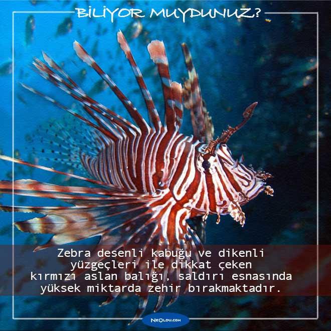 En Tehlikeli Balıklar