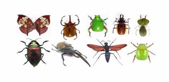entomofobi-hakkinda-bilinmesi-gerekenler-002.jpg