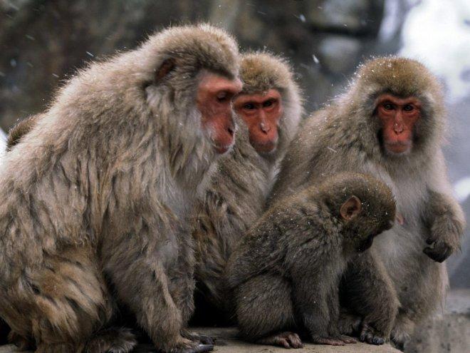 eski-dunya-maymunlari.jpg
