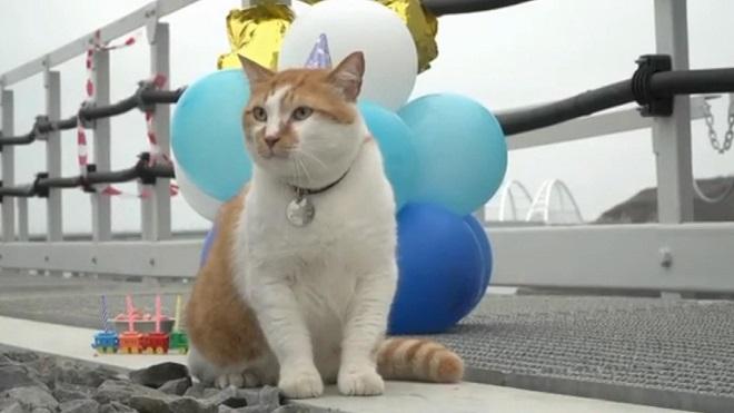 fenomen kediye sürpriz doğum günü
