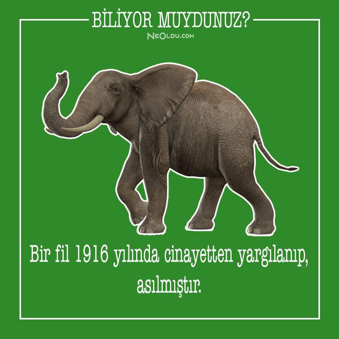 Filler Hakkında Bilinmeyen İlginç Bilgiler