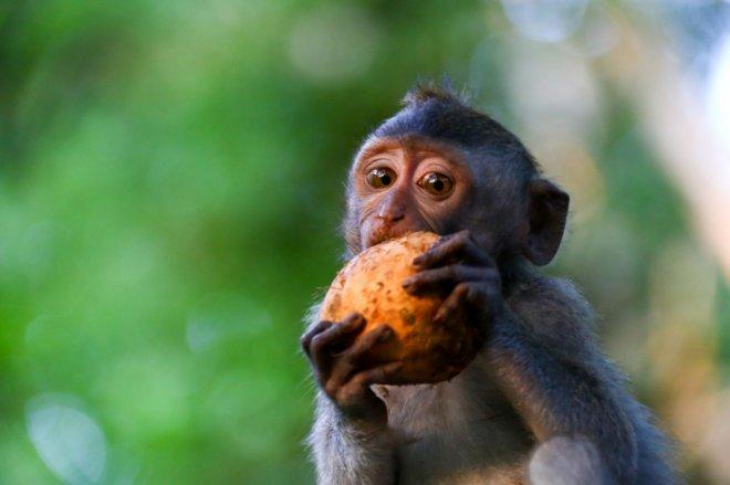 gelismis-maymun-turleri.jpg