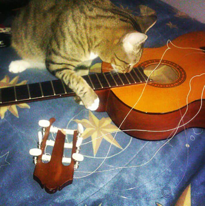 gitarı kıran kedi
